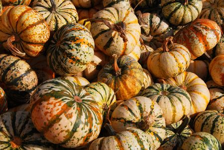 Thanksgiving gourds Stock Photo
