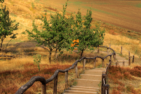 Hiking path in Harz mountains Standard-Bild - 106953565