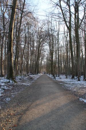 Ein Wald Weg Standard-Bild - 51779284