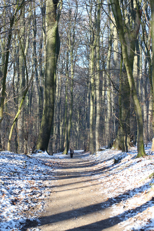 Ein foothpath Wald Standard-Bild - 51779287