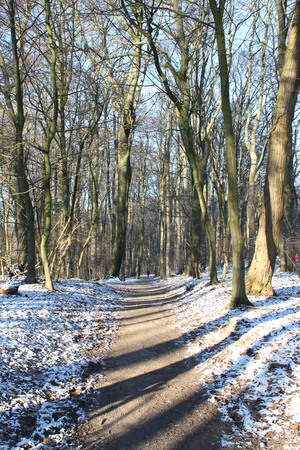 A foothpath forest Stock Photo