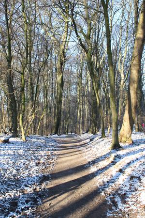Ein foothpath Wald Standard-Bild - 51779288
