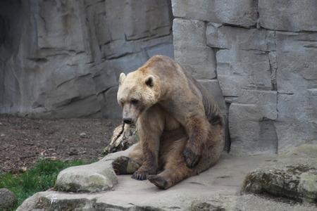 Ein Bär Standard-Bild - 57919237
