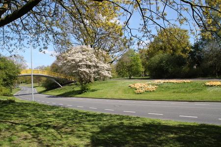 Eine Straße im Frühjahr Standard-Bild - 58012364