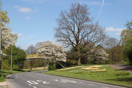 Eine Straße im Frühjahr Standard-Bild - 58012375