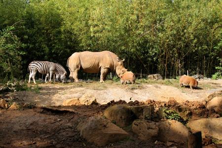 Ein Tier zu Fuß in einem Zoo Standard-Bild - 82564912