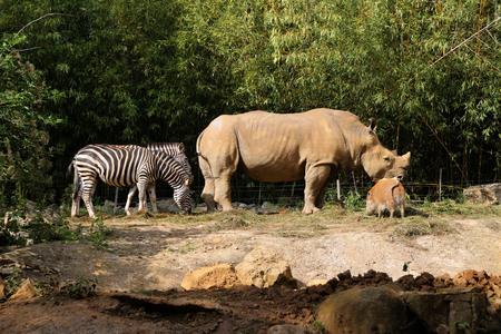 Ein Tier zu Fuß in einem Zoo Standard-Bild - 82564937