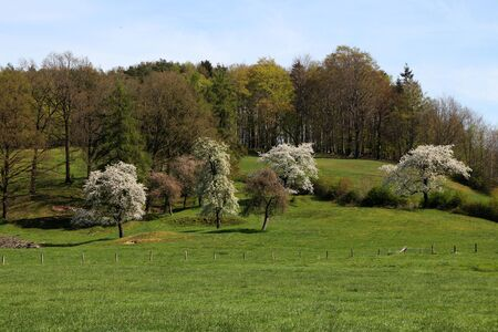 A meadow with flowering trees
