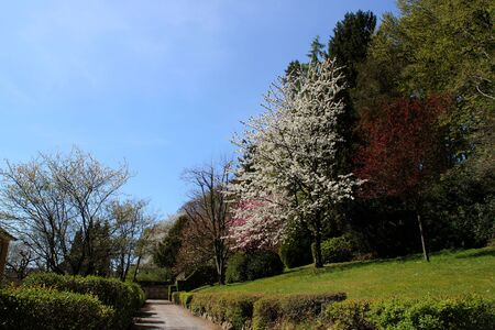 A park flowering trees