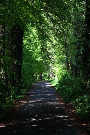 A road between trees