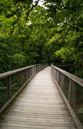 A bridge in a forest Stock Photo