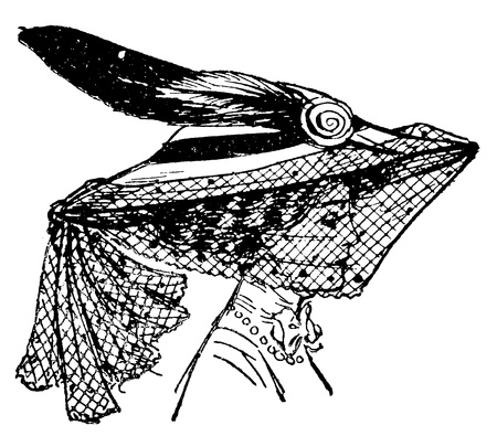 engraved image: An antique engraved illustration of a stylish woman in a veil, created in 1909  Stock Photo