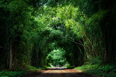 forest background: Road with Bamboo