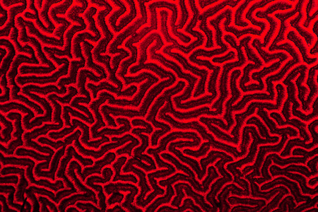 Red coral pattern photo