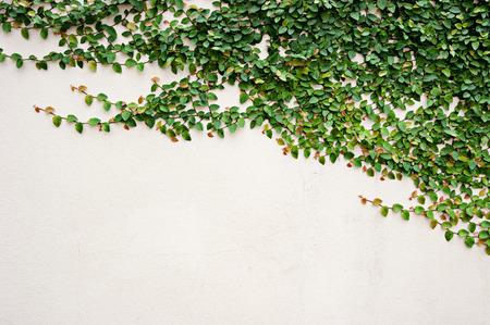 leaves on wall for wallpaper Foto de archivo