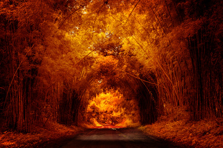 Autumn Road with Bamboo Stock Photo