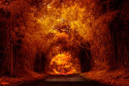 Autumn Road with Bamboo Standard-Bild