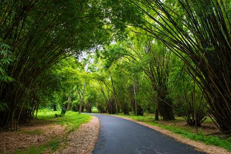 대나무와 도로