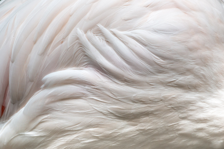 close up  flamingo wings texture