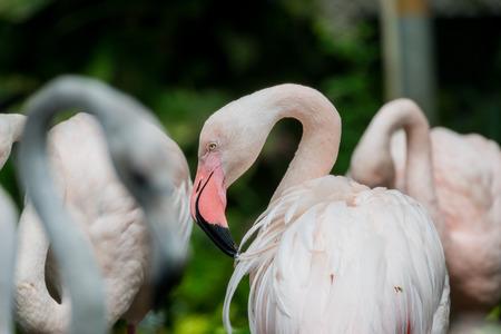 close up head of flamingo bird Stock Photo