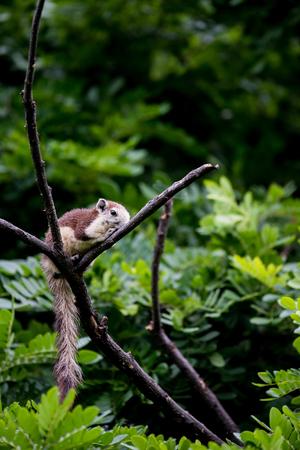 Variable Squirrel in the park 版權商用圖片