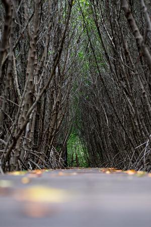 Mangrove forest walkway at Phetchaburi ,Thailand Banco de Imagens - 86795137