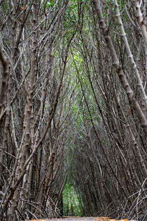 Mangrove forest walkway at Phetchaburi ,Thailand Banco de Imagens