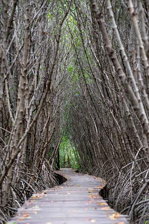 Mangrove forest walkway at Phetchaburi ,Thailand Banco de Imagens - 87418368