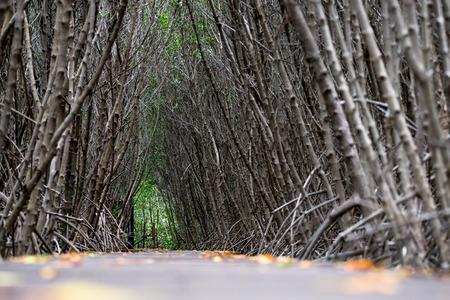 Mangrove forest walkway at Phetchaburi ,Thailand Banco de Imagens - 87418376