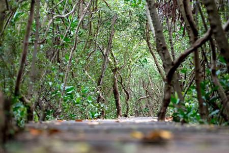 Mangrove forest walkway at Phetchaburi ,Thailand Banco de Imagens - 87418407