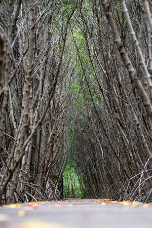 Mangrove forest walkway at Phetchaburi ,Thailand Banco de Imagens - 88707710