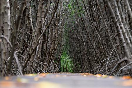 Mangrove forest walkway at Phetchaburi ,Thailand Banco de Imagens - 88710015