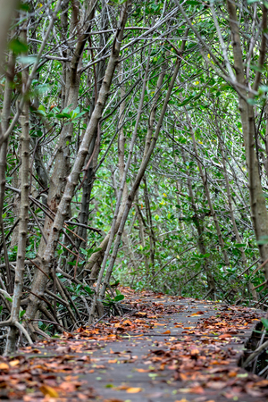 Mangrove forest walkway at Phetchaburi ,Thailand Banco de Imagens - 88710045