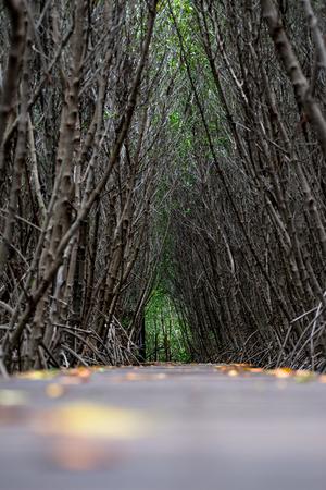 Mangrove forest walkway at Phetchaburi ,Thailand Banco de Imagens - 88706504