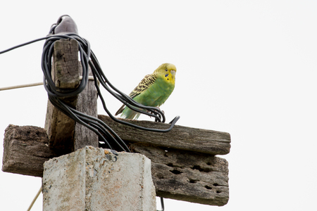 parakeet is any one of a large number of small to medium-sized species of parrot