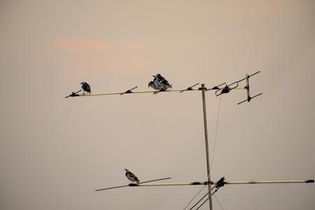 Bird standing on TV antenna Banco de Imagens