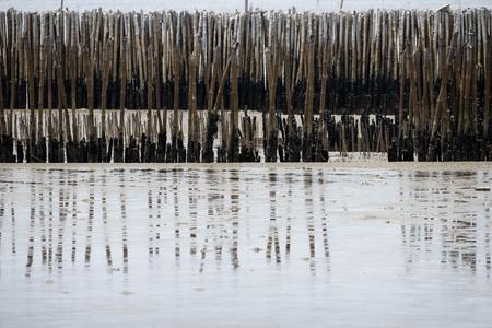 Beautiful Bamboo pole background texture Banco de Imagens