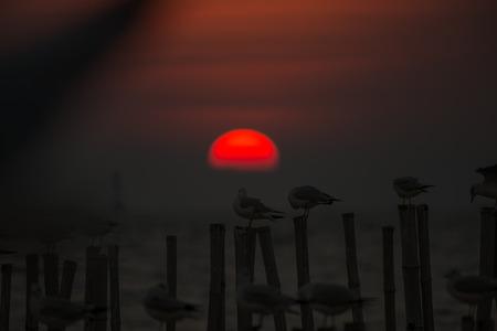 Seagulls on blur sunset background Banque d'images