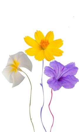 Flower for you Stock Photo - 11640969