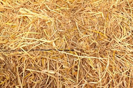 黄金の藁テクスチャ背景 写真素材