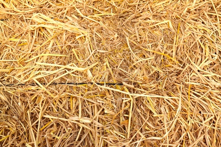 golden straw texture background photo