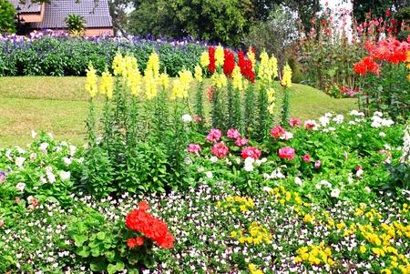 perennial: flower garden background  Stock Photo