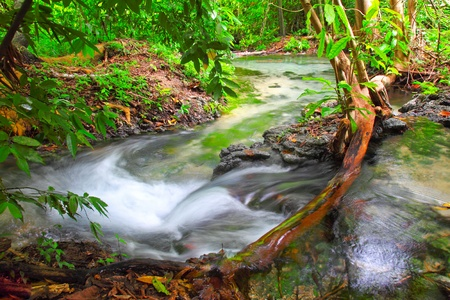 Water fall in forest photo