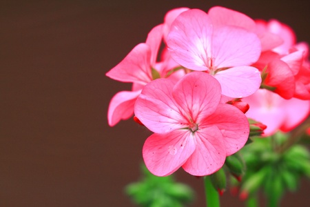 Pink flower Stock Photo - 13250428