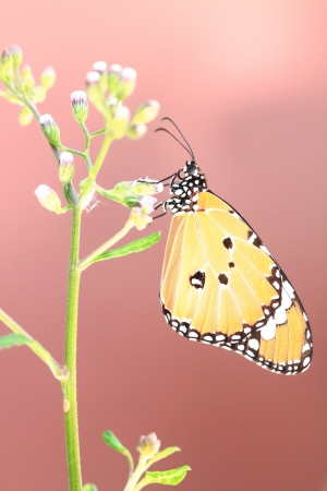 butterfly and background photo