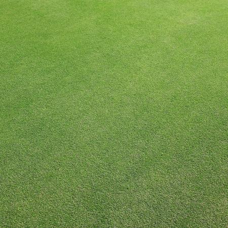 putter: Green Grass texture