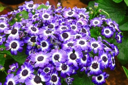 beautiful colorful flowers photo