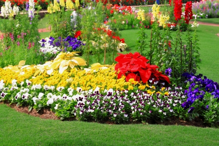 beautiful colorful flowers in garden photo
