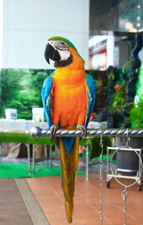 macaw parrots Stock Photo - 19114344
