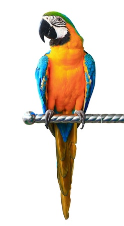 Kleurrijke rode papegaai ara geïsoleerd op witte achtergrond Stockfoto